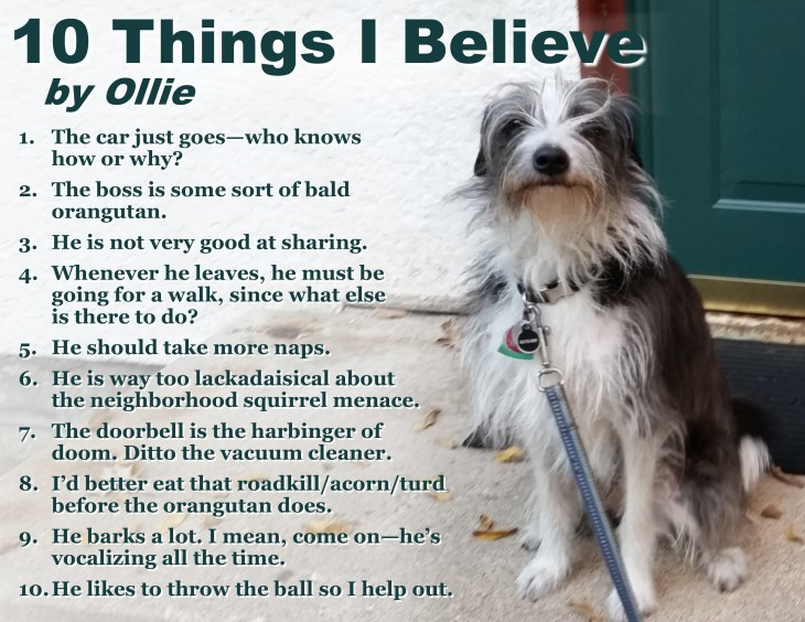 ten-tings-my-dog-believes